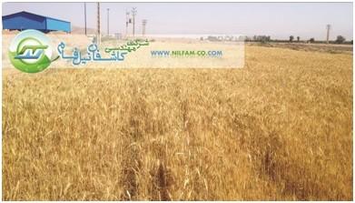 http://asreesfahan.com/AdvertisementSites/1395/04/23/main/5.jpg
