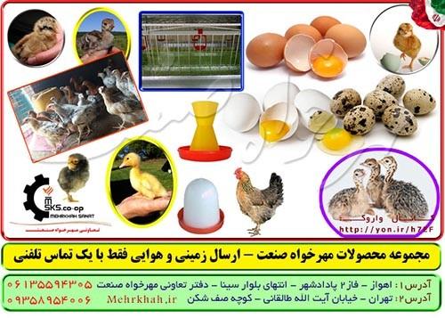 http://asreesfahan.com/AdvertisementSites/1395/06/04/main/Ghab-OmOOmi.jpg
