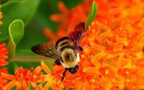 پخش عمده عسل و شهد سبلان