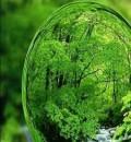 کارشناس محیط زیست|کارشناس رسمی دادگستری محیط زیست